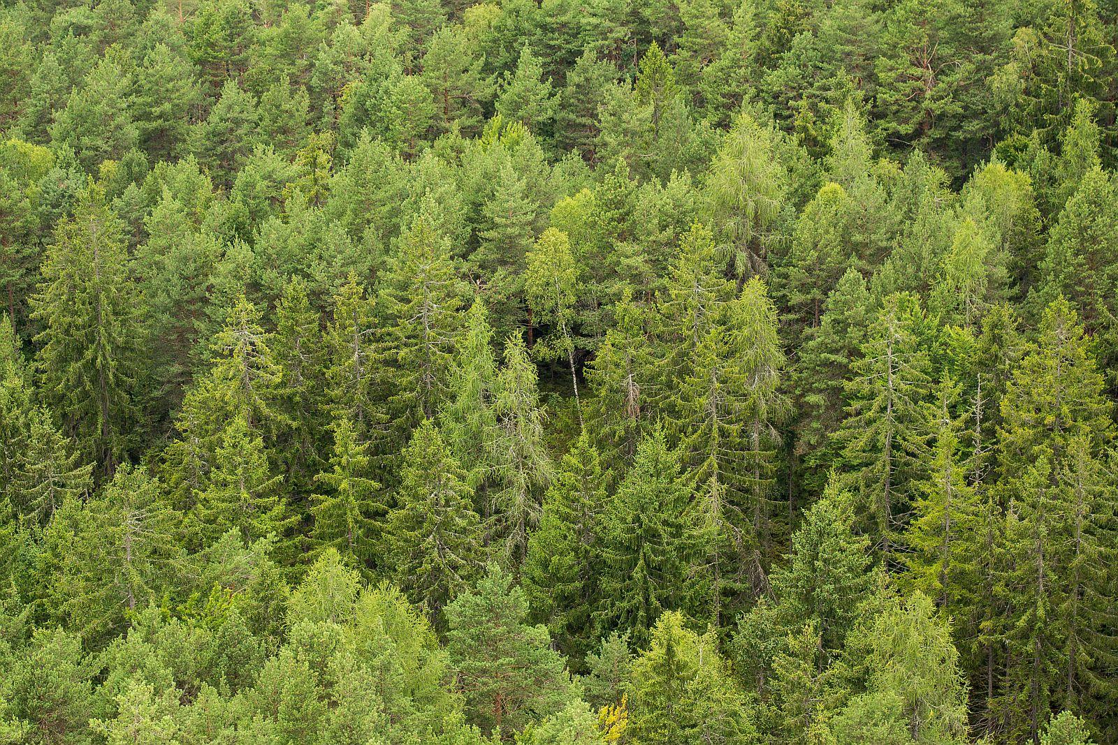 green-green-forest-trees-picjumbo-com